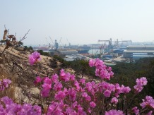 Shipyard through the new blooms