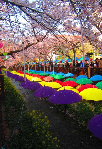 These umbrellas were put up in a small section of the river, because why not?